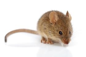 Dichte isolatie om muizen beter te weren