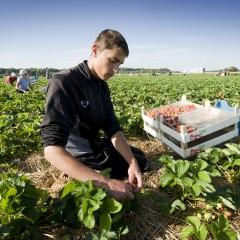 LTO Seizoenarbeid maakt het werkgevers makkelijk