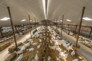 Geitenboerderij Hengevelde-5174