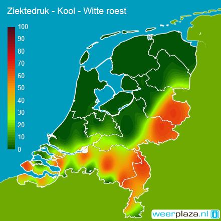 agroweeradvies-kool-witte_roest-ziektedruk-20160223