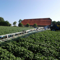 Loofdodingskaart aardappelteelt vanaf € 25