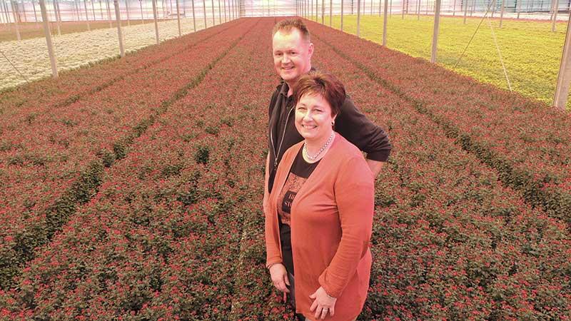 Chrysantenkwekerij Westeringh Flowers sloot het hele glastuinbouwpakket over naar LTO Verzekeringen