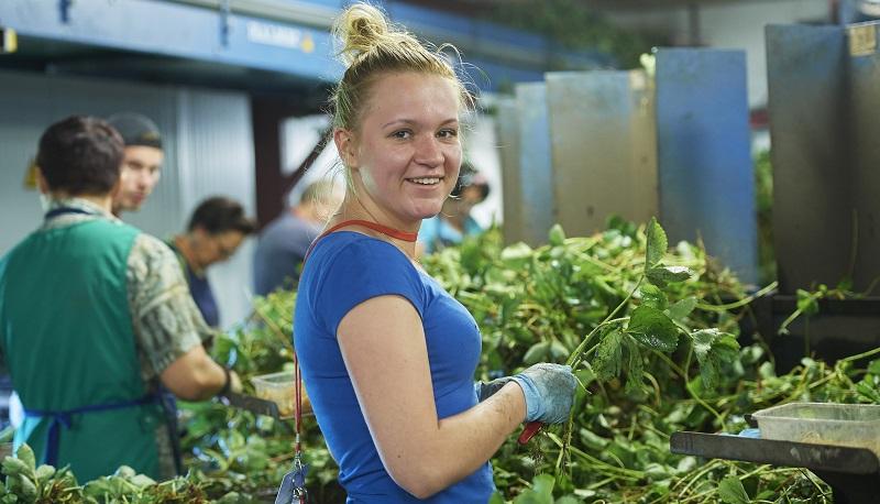 Boeren en tuinders roepen werkzoekenden op voor seizoenswerk