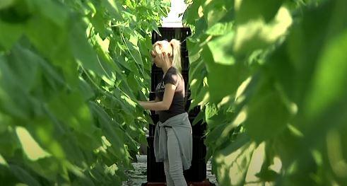 Nederlanders worden opgeroepen om te helpen oogsten (video)