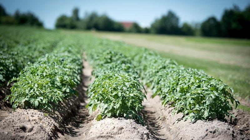 BioScope op de Aardappeldemodag Online (19 augustus)