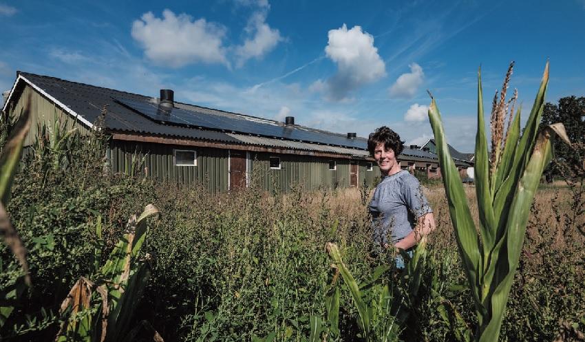 'Zonnepanelen passen bij maatschappelijk verantwoord ondernemen'